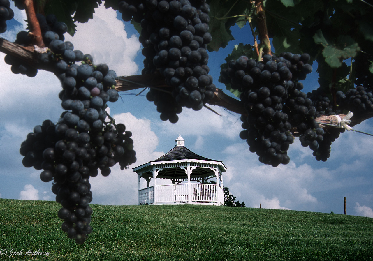 Three Sisters Vineyard, Dahlonega, GA