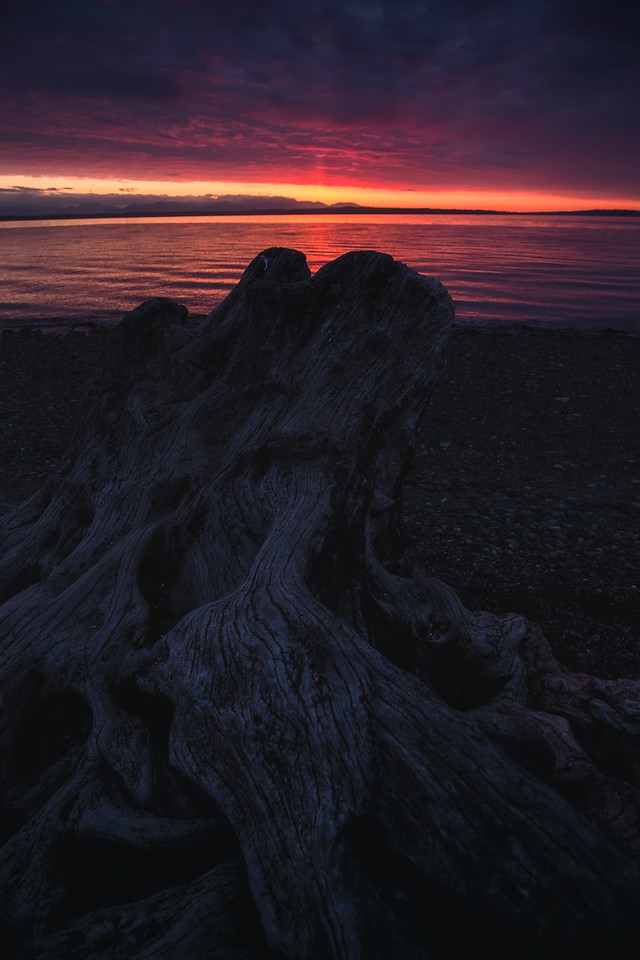 Another Dead Beach Log - Carkeek Park - April 27th, 2016