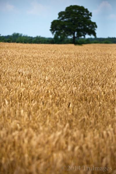 Amber fields