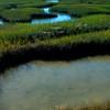 The Pond,