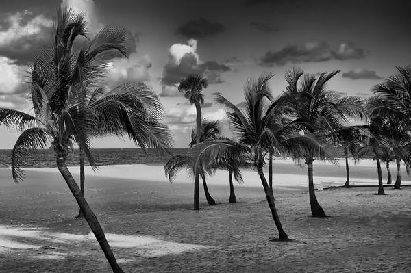 Beach Foliage