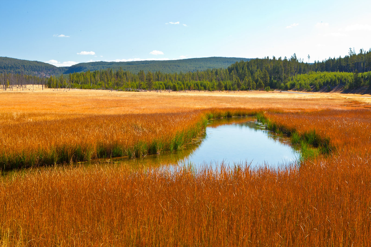 Fall grasses and creek, Yellowstone National Park