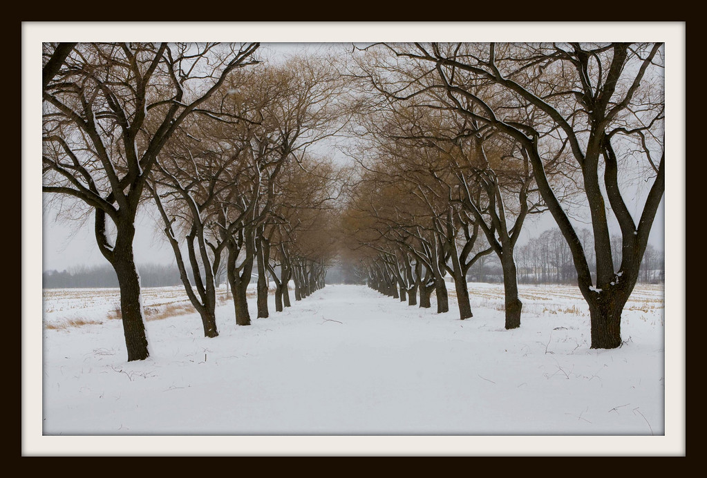 IMG#7591 The path, Markham, Canada
