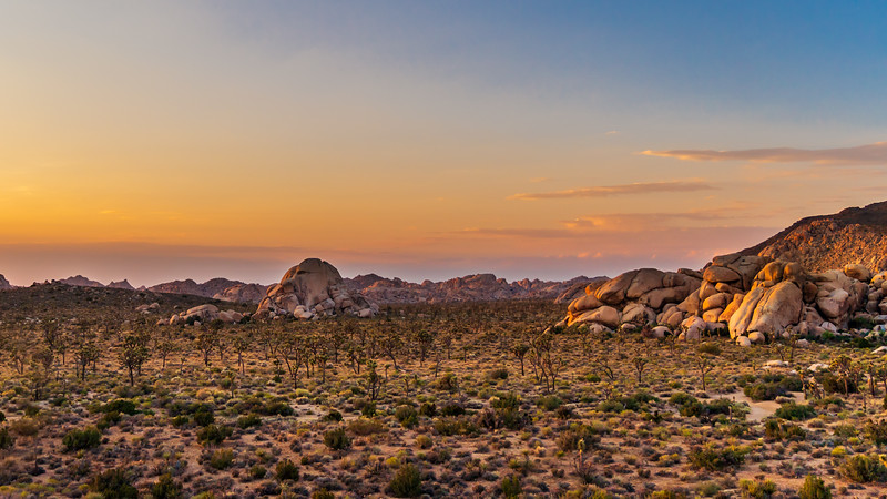Sunrise in Joshua Tree