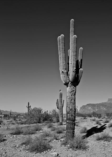 Desert in B&W.