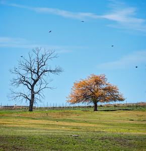 Autumn Field with Birds