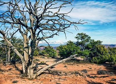San Dias Mountains and Tree