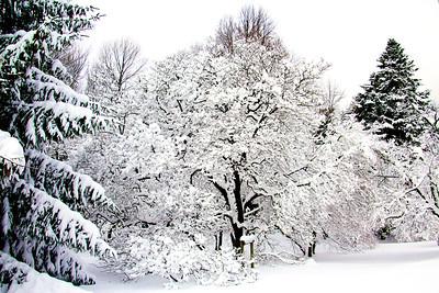 Durand Eastman Park - Winter 2013