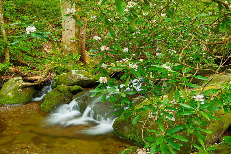 Roaring Fork stream scenic 4, Great Smoky Mountains