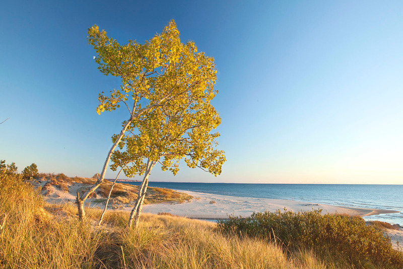 Fall foliage at Lake Michigan