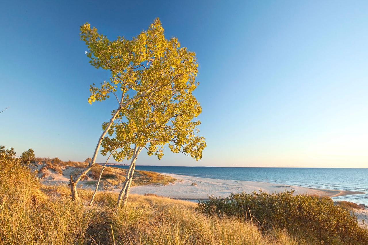 Fall foliage at Lake Michigan