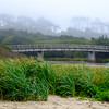 Foggy Ona Beach State Park