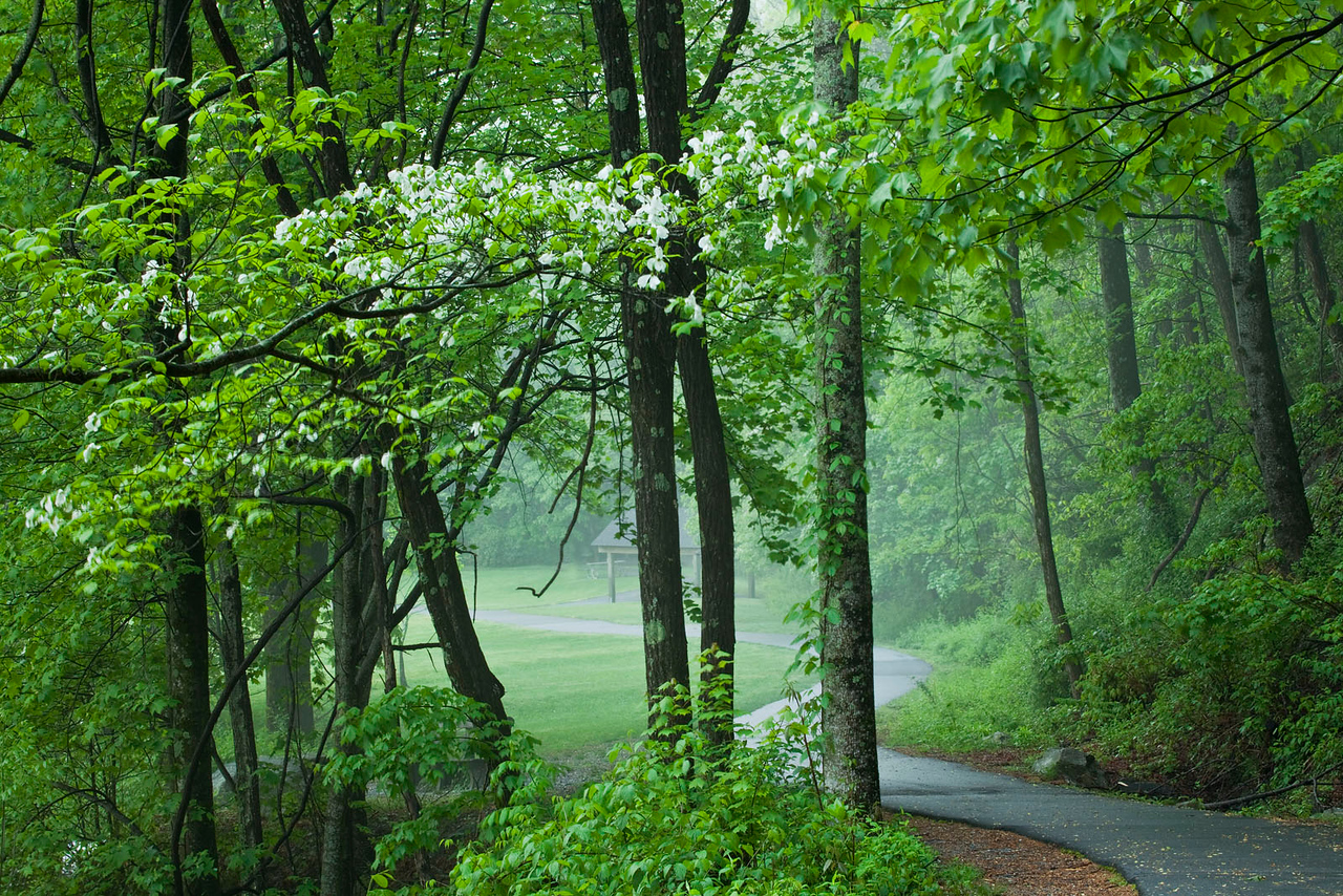 Misty walkway, spring time.
