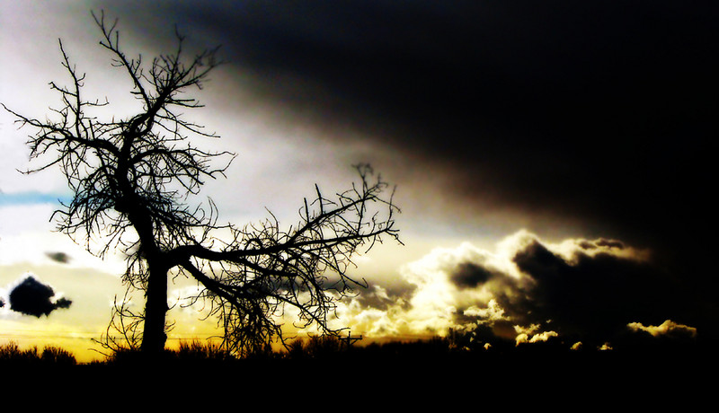 Wild tree.