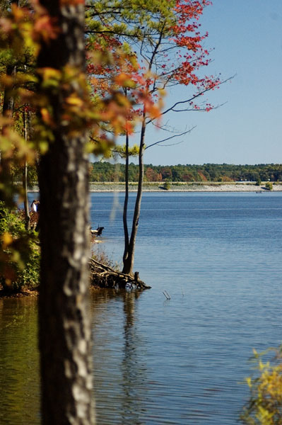 Fall colors of Jordan Lake