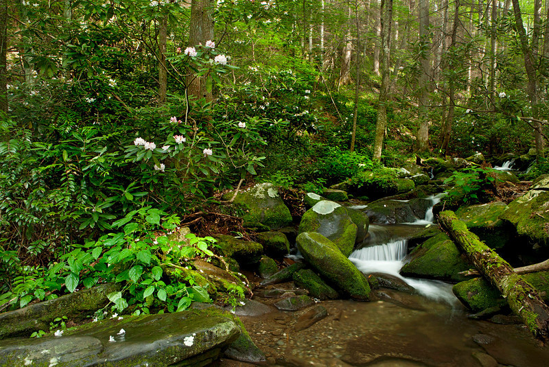 Roaring Fork stream scenic 5, Great Smoky Mountains