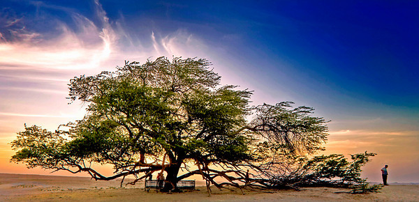 Tree of Life - Bahrain