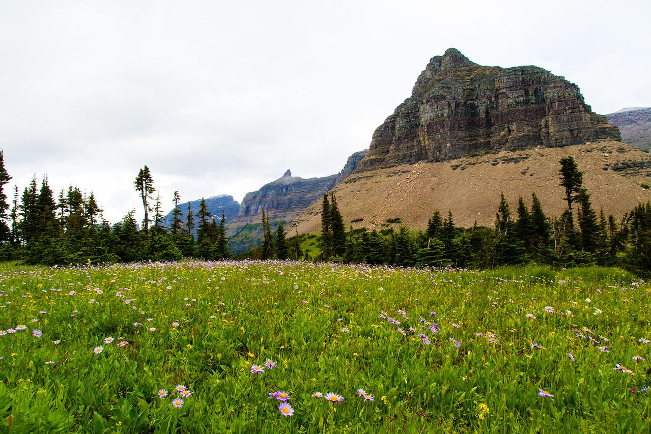 At  Logan Pass