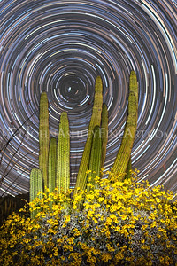"""Organ Pipe Star Trails"""
