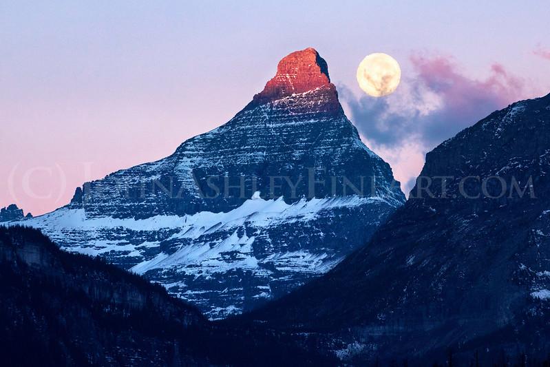 Mount Reynolds Harvest Moon