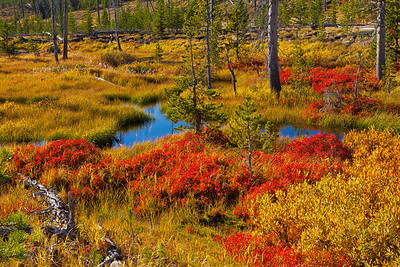Fall Tundra, Yellowstone National Park