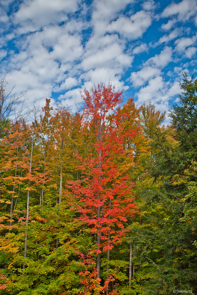 Hartwig Pines State Park<br /> 2011