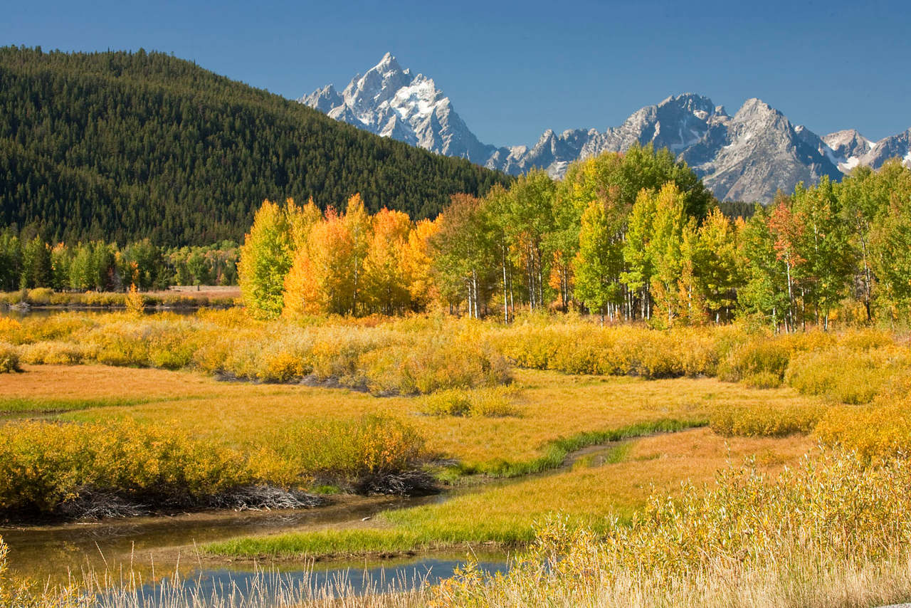 Fall color at the Tetons, Wyoming