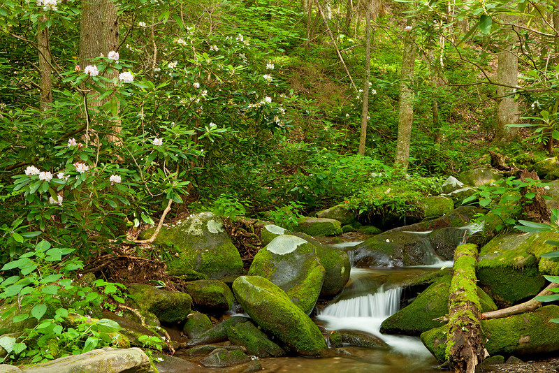 Roaring Fork stream scenic 6, Great Smoky Mountains
