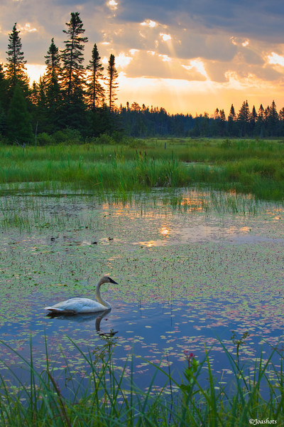 Seney National Wildlife Refuge, Seney MI 2010