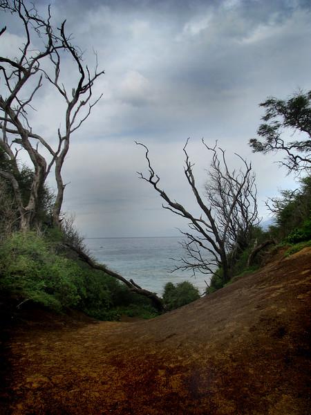 Maui, Hawaii Series<br /> Image #5005<br /> 2009