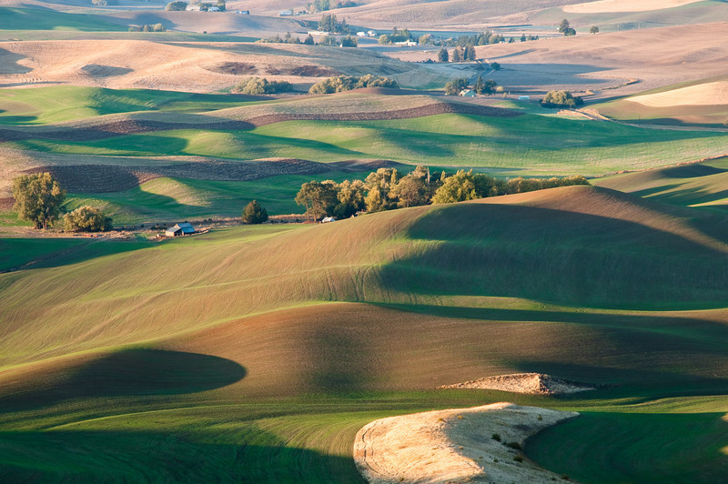 Rolling Hills at Steptoe Butte