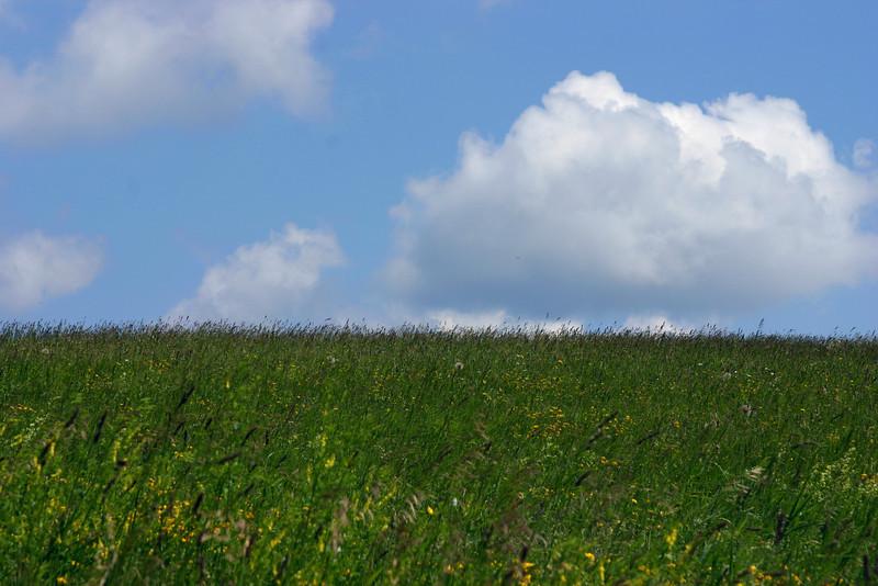A grassy field on a bright sunny day