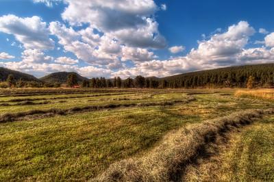 Hay fields in Bayfield, Colorado