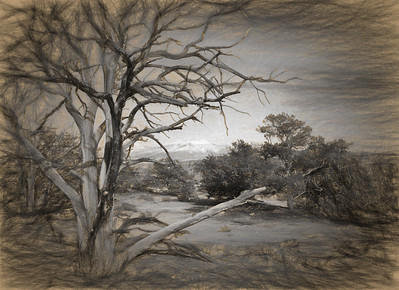 San Dias Mountains and Tree sketched