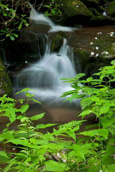 Roaring Fork stream scenic 8, Great Smoky Mountains
