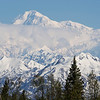 Denali #04, from Mary Carey's Lodge, May 2013