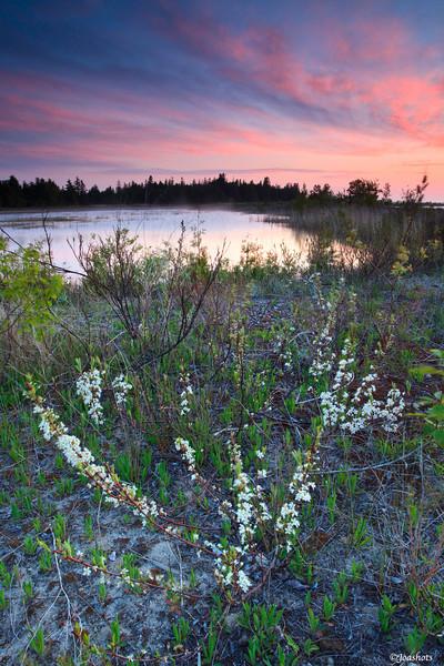Wilderness State Park, MI 2010