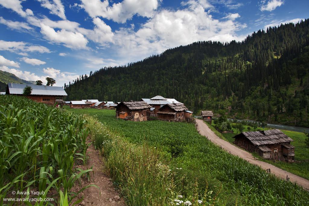 Sardari village and field of maize, just before Taobat