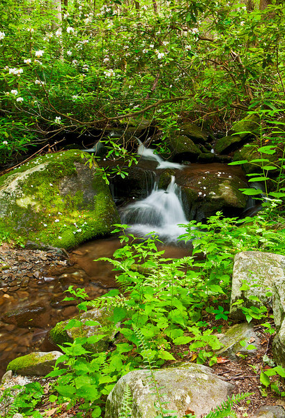 Roaring Fork stream scenic 7, Great Smoky Mountains