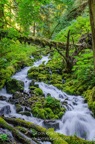 Bubbling brook between Wahkeena Falls and Fairy Falls
