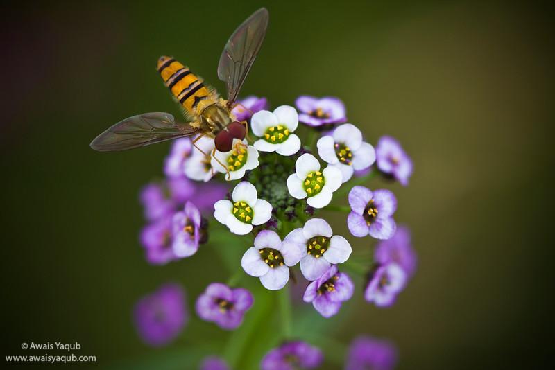 Flower Photo Creative commons