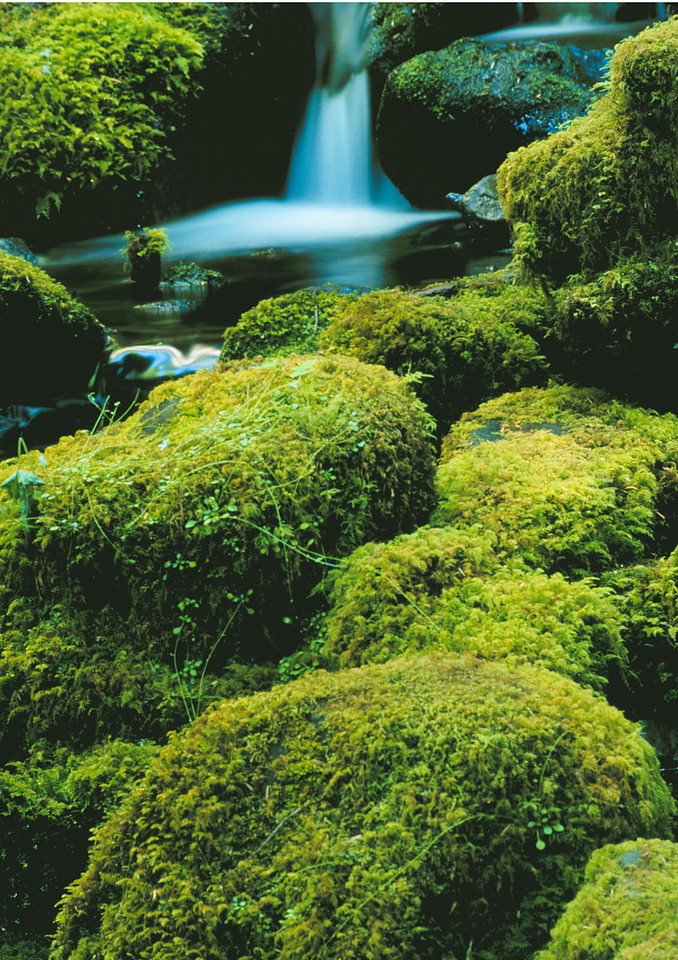 Mossy rocks and waterfall, Olympic National Park, Washington