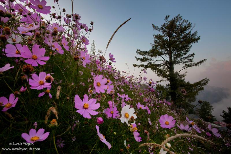 Flower glory