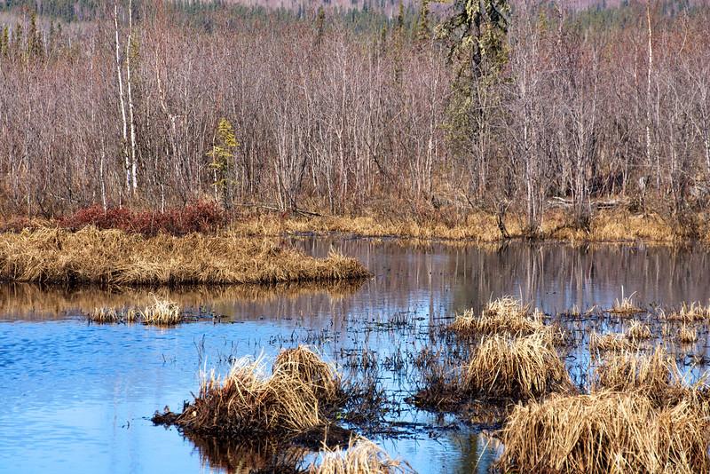Pond off Ballaine Road #3