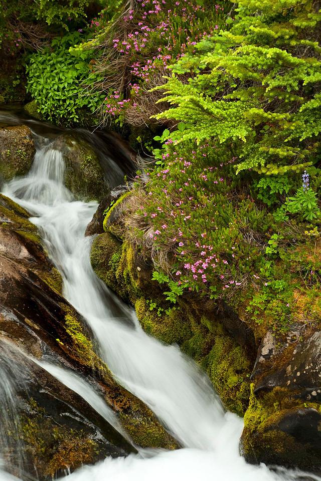 Cascading stream with wildlowers, Mt Rainier, Washington