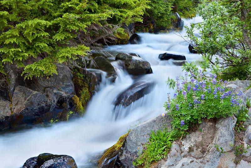 Stream cascade with lupines, Mt Rainier, Washington