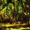 Glowing Trees of Newport