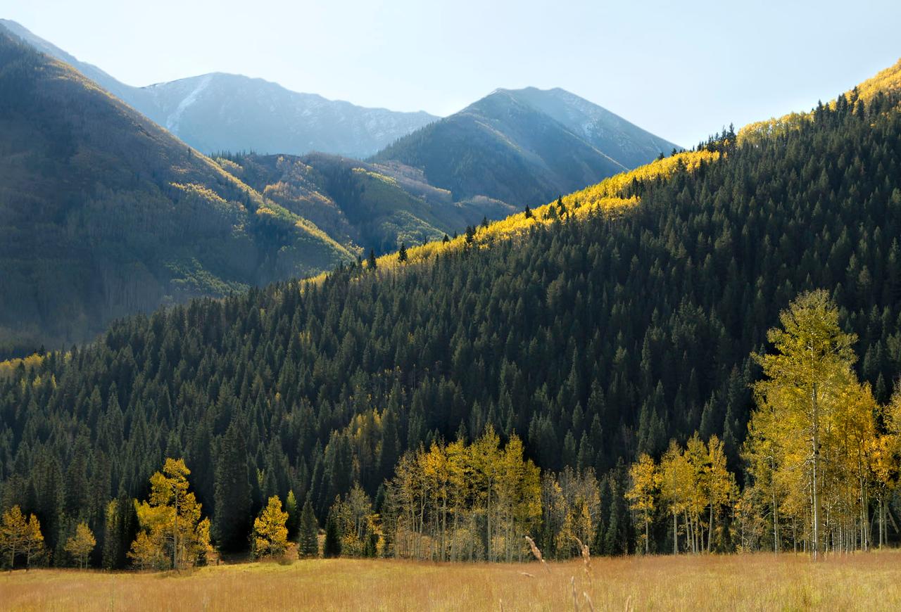 Mountains with fall color, near Aspen Colorado
