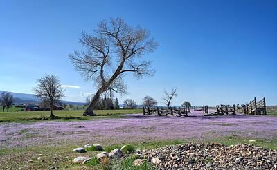 Spring Blooms in Colorado