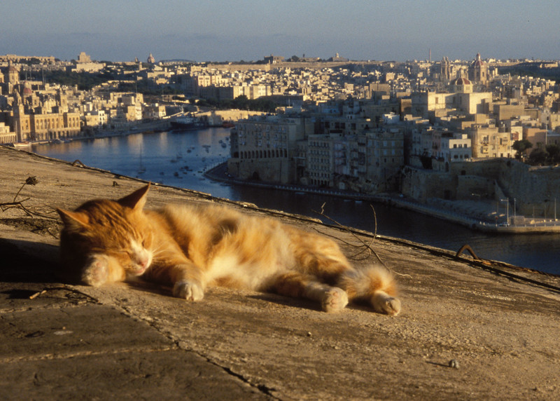 Cat sleeping in Malta